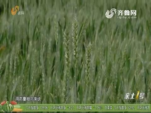 技术集成 助力鲁西小麦减肥增效