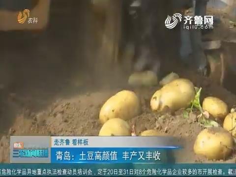 【走齐鲁 看样板】青岛:土豆高颜值 丰产又丰收