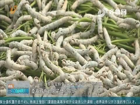 【三农信息快递】发展蚕桑产业 助力乡村振兴