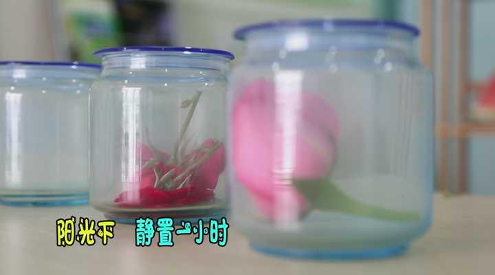 《生活大求真》:如何快速消除空气中的二手烟雾,原来可以摆放这种花!