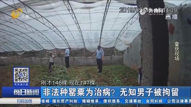 济南:非法种罂粟为治病?无知男子被拘留