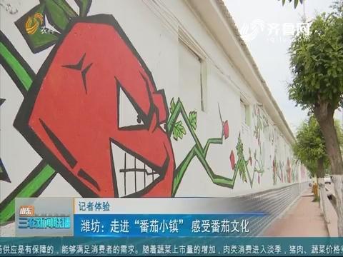 """【记者体验】潍坊:走进""""番茄小镇""""感受番茄文化"""