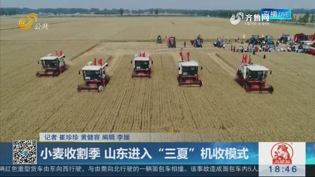 """小麦收割季 山东进入""""三夏""""机收模式"""