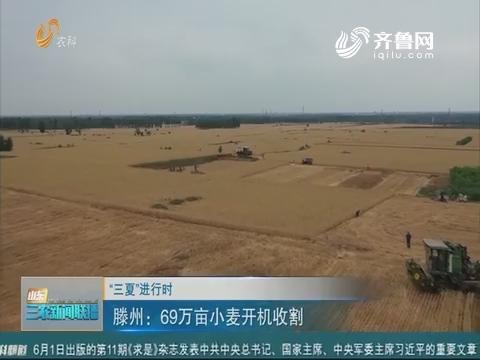 """【""""三夏""""进行时】滕州:69万亩小麦开机收割"""