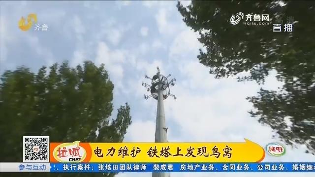 济阳:电力维护 铁塔上发现鸟窝