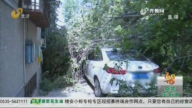 济南:大风刮断树枝 砸伤私家车