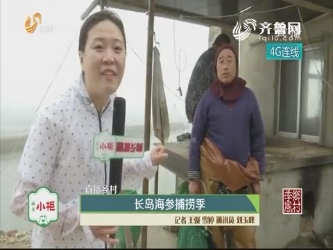 【直播乡村】长岛海参捕捞季