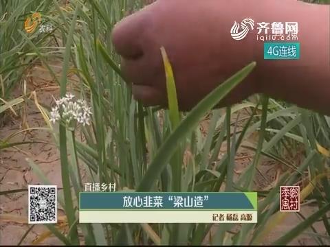 """【直播乡村】放心韭菜""""梁山造"""""""