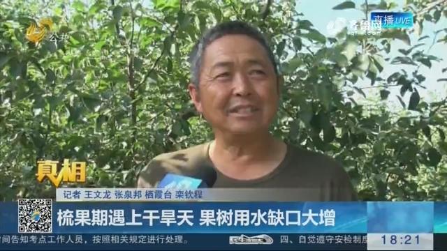 【真相】栖霞:梳果期遇上干旱天 果树用水缺口大增