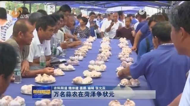 萬名蒜農在菏澤爭狀元