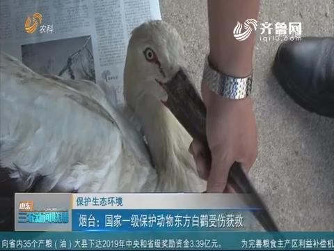 【保护生态环境】烟台:国家一级保护动物东方白鹳受伤获救