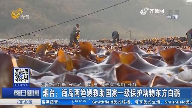 烟台:海岛两渔嫂救助国家一级保护动物东方白鹳