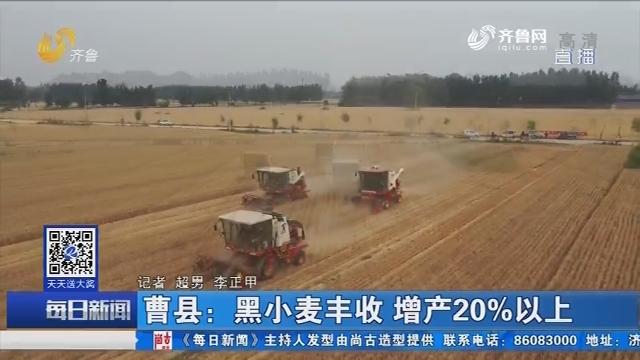曹县:黑小麦丰收 增产20%以上