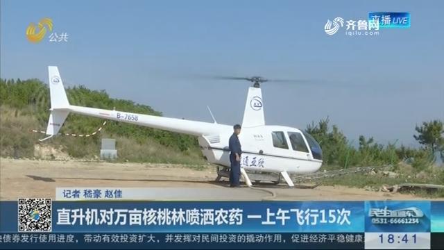 济南:直升机对万亩核桃林喷洒农药 一上午飞行15次