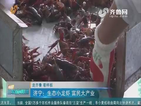 【走齐鲁 看样板】济宁:生态小龙虾 富民大产业