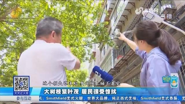 济南:大树枝繁叶茂 居民很受惊扰