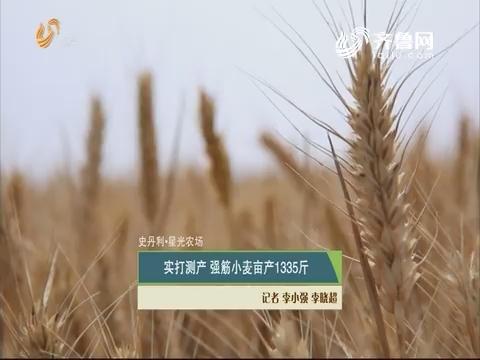 【史丹利·星光农场】实打测产 强筋小麦亩产1335斤