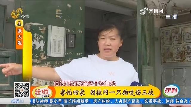 淄博:害怕回家 因被同一只狗咬伤三次