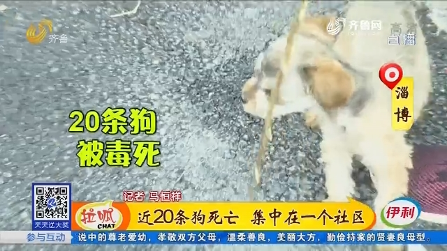 淄博:近20条狗死亡 集中在一个社区