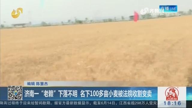 """济南一""""老赖""""下落不明 名下100多亩小麦被法院收割变卖"""
