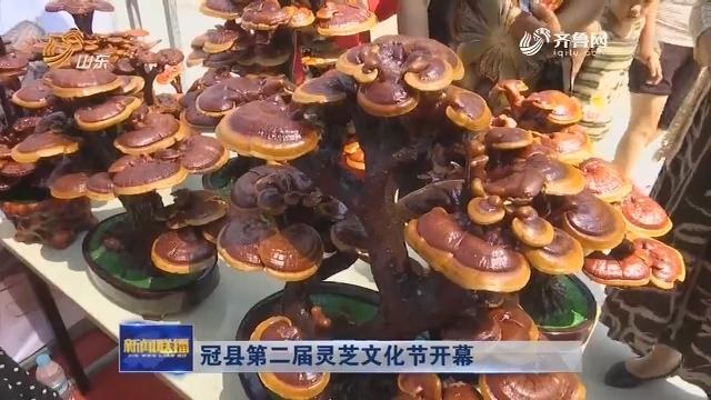 冠县第二届灵芝文化节开幕