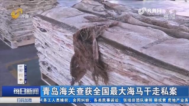 青岛海关查获全国最大海马干走私案