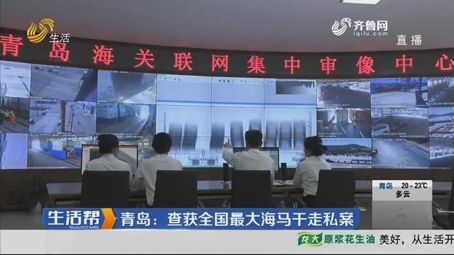 青岛:查获全国最大海马干走私案
