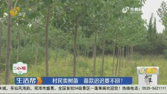 【独家】临沂:村民卖树苗 苗款迟迟要不回?