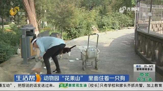 """济南:动物园""""花果山"""" 里面住着一只狗"""