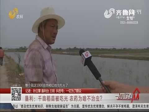 垦利:千亩稻苗被吃光 农药为啥不治虫?
