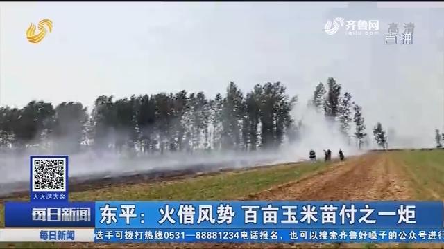 东平:火借风势 百亩玉米苗付之一炬