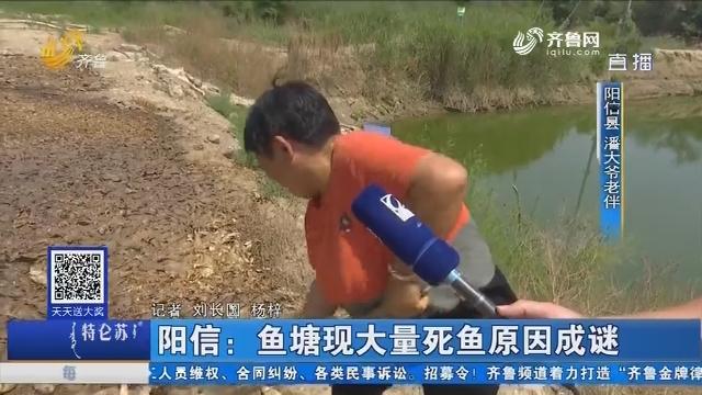 阳信:鱼塘现大量死鱼原因成谜