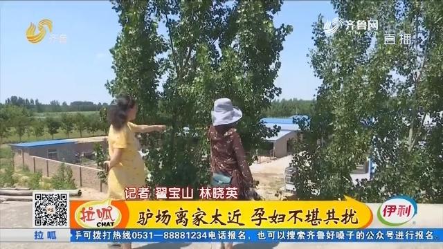 聊城:驴场离家太近 孕妇不堪其扰