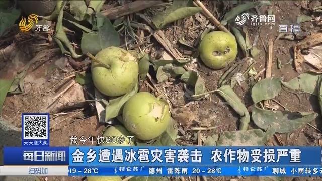 金乡遭遇冰雹灾害袭击 农作物受损严重