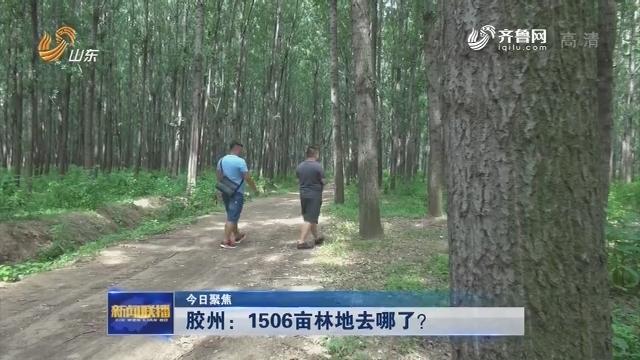 【今日聚焦】 胶州:1506亩林地去哪了?