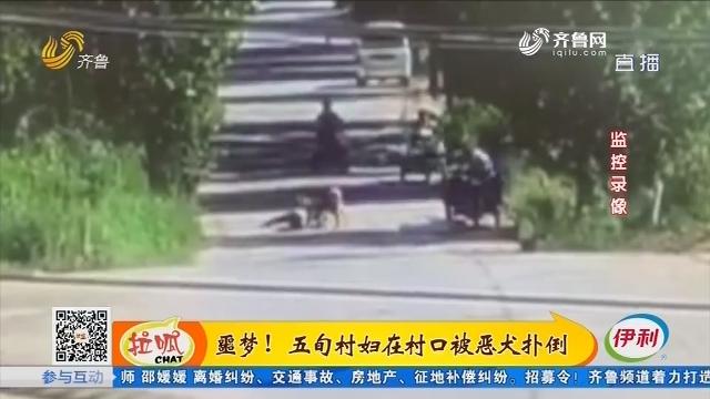 胶州:噩梦!五旬村妇在村口被恶犬扑倒