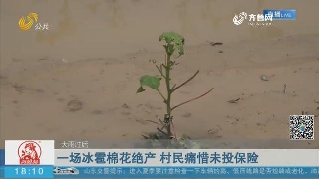 【大雨过后】滨州:一场冰雹棉花绝产 村民痛惜未投保险