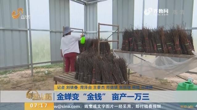 """【闪电新闻排行榜】金蝉变""""金钱"""" 亩产一万三"""