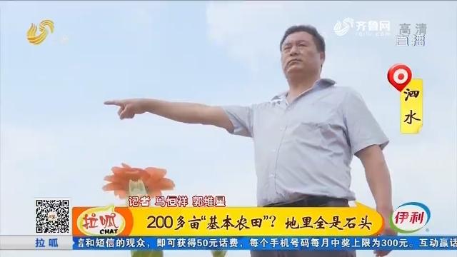 """泗水:200多亩""""基本农田""""?地里全是石头"""