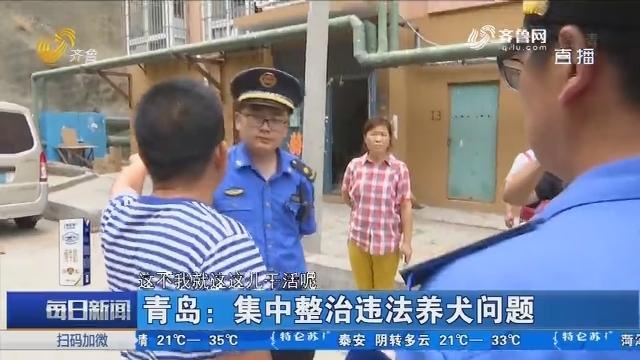 青岛:集中整治违法养犬问题