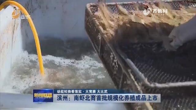 【动能转换看落实·大竞赛 大比武】滨州:南虾北育首批规模化养殖成品上市