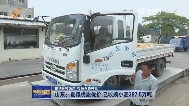 【推动乡村振兴 打造齐鲁样板】山东:夏粮优质优价 已收购小麦387.5万吨