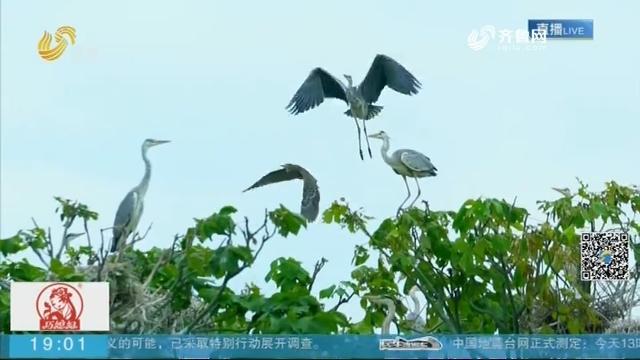 """菏泽:网红""""鸟岛""""景点 摄影师与鸟共舞"""
