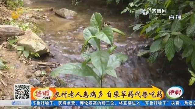 济南:农村老人患病多 自采草药代替吃药