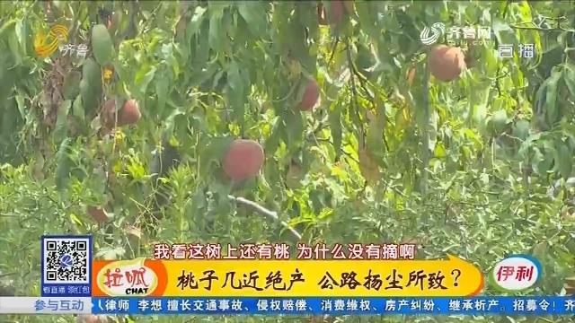 滕州:桃子几近绝产 公路扬尘所致?