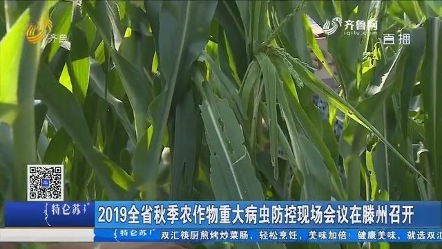 2019全省秋季农作物重大病虫防控现场会议在滕州召开