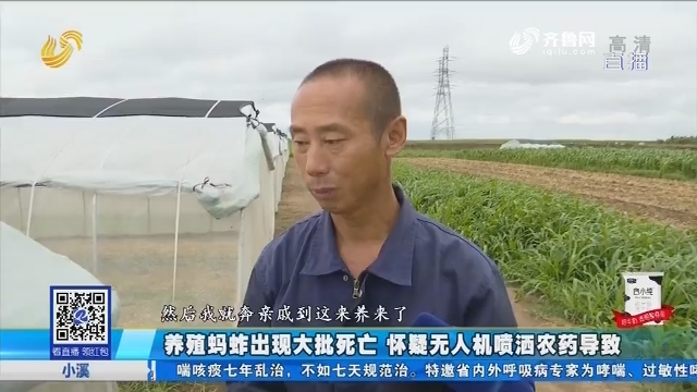 青岛:养殖蚂蚱出现大批死亡 怀疑无人机喷洒农药导致