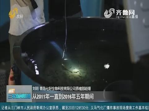【三农信息快递】青岛:墨瑞鳕鱼规模化全人工繁育获得突破