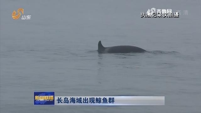 长岛海域出现鲸鱼群