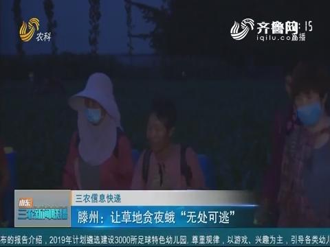 """【三农信息快递】滕州:让草地贪夜蛾""""无处可逃"""""""